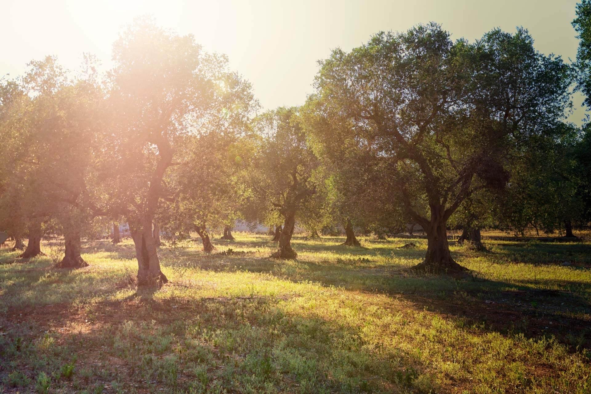 Avuliv, prodotti biologici per natura
